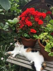 Gwendolyn in the garden