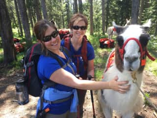 I had the awesome experience of hiking in the Jedediah Smith Wilderness with llamas. They were amazing !