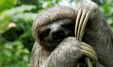 I'm obsessed with sloths!