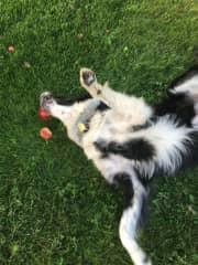 Apple picking , catching and munching