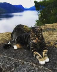 My handsome cat Freo on the bluff! Rendezvous Island