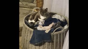 Loves a comfy spot
