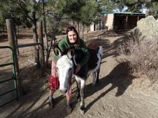 Donkey-sitting!