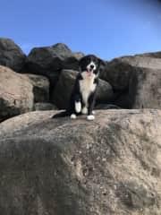 Ollie at the beach