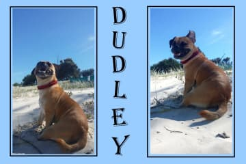 Dudley!  Loves fashion and posing for photos