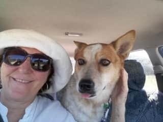Kalar, with Sunny, going for a ride to the dog beach on Stradbroke Island, Australia