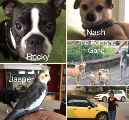 SWEET COMPANIONS: Rocky and Nash; Anchovy, Cinnamon, Kevin, Charlie and Spock; Jasper