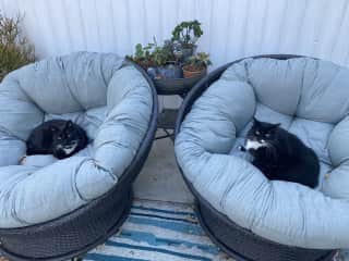 Backyard lounge area in cozy papasan chairs