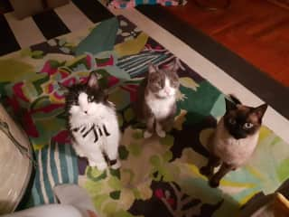 Sit! Not an easy feat with 3 gorgeous kitties... maybe its the tuna in my hand!