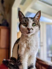 Penelope, an elderly cat in South Carolina. (She LOVES it when they take the dog with them!)