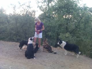 Carolyn with her 7 rescued dogs.