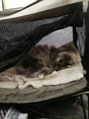 My cat Bait in his camping bed. 2016