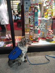 Window Shopping with Ceilidh(Kaylee) my service doggie.