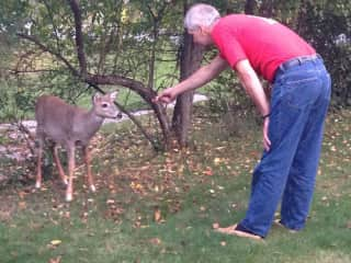 Tim likes a Challenge.  This deer was in my Grandmother's yard