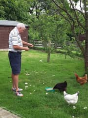 Ian getting reacquainted with his childhood, feeding the chooks at our second house and pet sit.