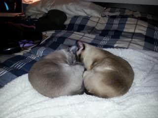 Kitty Bro Love in Boston