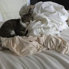 Fitz keeping the clean laundry warm!
