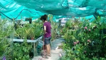 Watering a polytunnel of orchids on a New Zealand house sit.