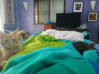 Woke up to the three sweet cats - the best way to wake up! (Merida- Mexico)