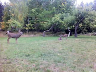 walking through orchard and meeting a friendly family of deer
