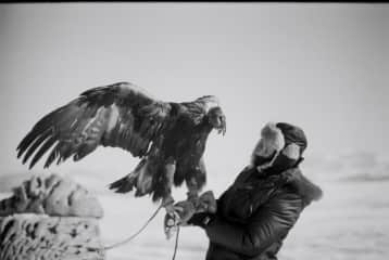 When I was photo documenting a kashakh family and their horses and eagle in Mongolia