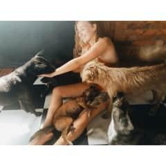 8 dog squad in Bali (1 alpha cat)