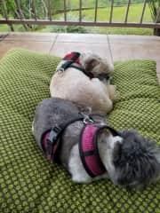 Milo & Sheba