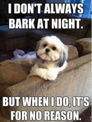 I love dog memes!