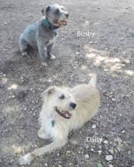 Daisy & Busby