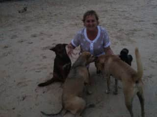 Me with street dogs in Thailand