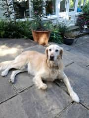 Stella in Hampstead