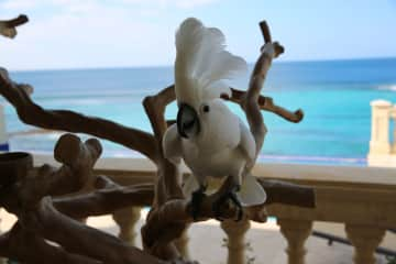 Chatting with Kaliki at a relative's villa in Anguilla.