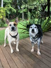 Bob and Dusty from Alstonville, NSW