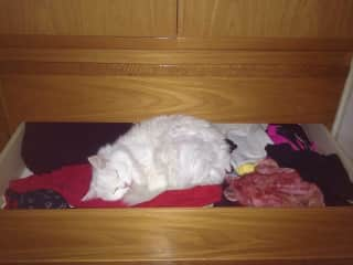 A cat from previous sitting sleeping on my clothes :)