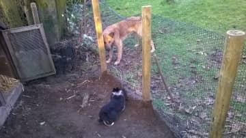 Nico keeps an eye on George the rabbit