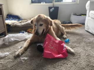 Since I can't upload a video of Luke opening a present, here's a photo showing his excitement. Us humans can learn so much about the simple pleasures in life from animals.