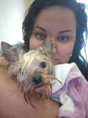my friend's dog after bathing