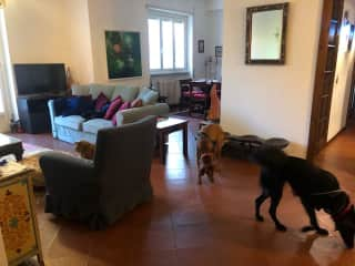 Spacious 4 bedroom appartment
