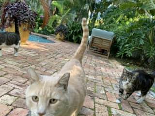 Cat sitting in Florida
