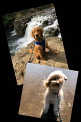 A couple of my furry clients we took on a hike near a creek and Cannon Beach, Bruce and Charlotte
