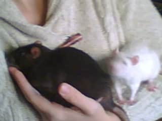 me and my rats
