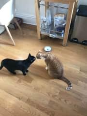 Coco (left) kissing Simba (right)