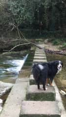 Eclaire enjoying a long walk along the river in French alps forests off-leash with me.