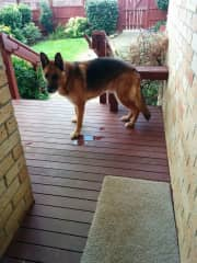 Shadow on the deck