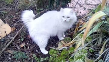 My beautiful cat Angele x