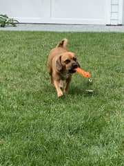 Puggles- a little play goes a long way