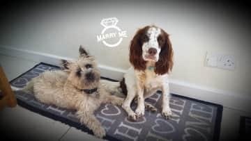 Beautiful Sprocker Nala (Kent) and our dog Alfie