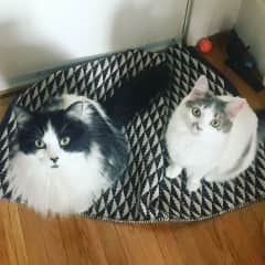 Don't look at us, the rug rumpled itself!