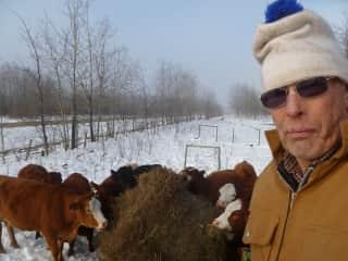 Ken & cows