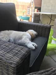 Chewy loves sleeping on the outdoor rocking chair!